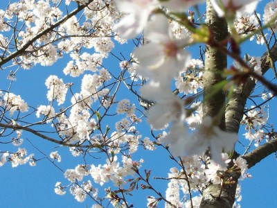 cherrytrees - Untitled-4